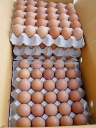 2016 fresh chicken eggs