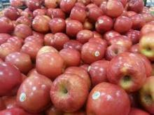 Fresh Royal Gala Apples, Fuji Apples, Golden Delicious Apples, Red Delicious Apples