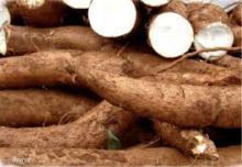 Fresh Cassava for sale