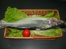 Pangasius ( Basa/ Dory) whole round origin Vietnam
