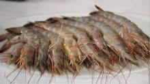 Shrimps , Lobsters , Crabs