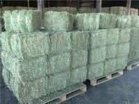 Quality Alfalfa Hay,Alfalfa Pellet