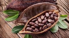 Cacao bean / cocoa (Organic certified) Top Supplier/ 100% Natural Cacao Beans