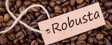 washed AAAAA arabica and robusta green coffee beans for sale