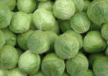 new crop Fresh Peking Cabbage, Chinese Round Cabbage