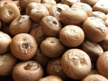 WHOLE BETEL NUT FOR SALE