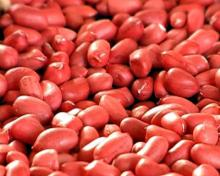 New crop red skin peanuts