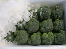 Chinese Fresh Broccoli, Green Broccoli