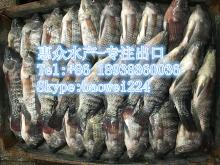 hot sell frozen tilapia fish whole round tilapia