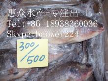 Aquatic seafood black tilapia fish