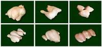 Frozen   Halal   Whole   Chicken ,  Chicken  Breast,  Chicken  Quarter Legs,  Chicken  Paws and Feet (Grade A)
