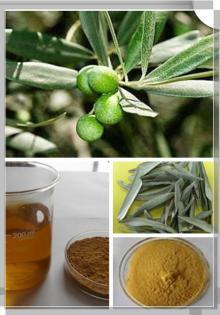 Olive leaf extract, oleuropein,  hydroxytyrosol , CAS: 32619-42-4, CAS: 1057-60-1