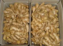 Fresh Ginger, Onions and Galic for Sale