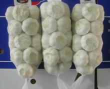 Chinese fresh new garlic