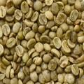 Unwashed Robusta Green Coffee Beans Grade 1 Screen 16