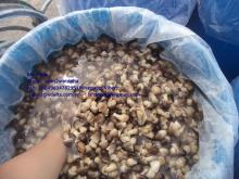 STRAW MUSHROOM IN BRINE WITH BEST QUALITY