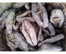 Vietnam Dried Sea Cucumber/ Black Prickly Fish/ Black Sand Fish / White Teat Fish