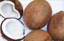 Semi Husked Coconut/ Fresh Husk Coconut origin Vietnam