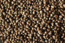 Hemp seeds, Hemp Powder Hemp Oil