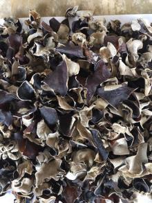 black fungus for salad 2 x 2 cm