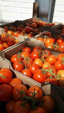 Tomatoes red round