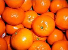 Tasty fresh baby mandarin oranges for sales