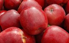Fresh delicious red apple