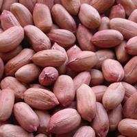 Peanuts kernels For Sale