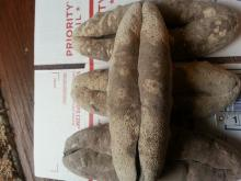 Quality Dried and Frozen Sea Cucumber,Quality Dried Sea Cucumber
