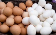 white and brown chicken egg