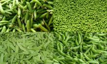 High Quality Green beans, Green peas, Green & Red Chilli