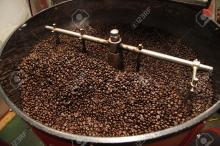 criollo cocoa beans