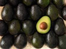 Avocado   fruit
