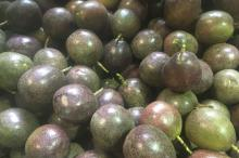 100% Natural Fresh Passion Fruit for Sale