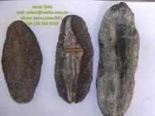 Dried sea cumber (Black fish sea cucumber