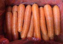 Копия свежей моркови нового урожая 2016 года из Сямыня