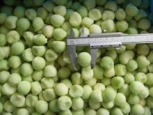 new crop IQF Hami Melon Ball, Frozen honeydew melon, cantaloupe