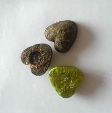 heart shape Oolong tea