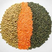 Lentils HPS Quality Dry Green Import Red Lentils