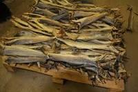 Fresh Stock Fish Cod Available