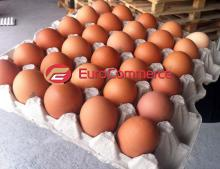 Eggs ukraine / Chicken brown eggs / Chicken fresh eggs