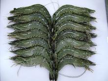 Vanamei Shrimp with best prices