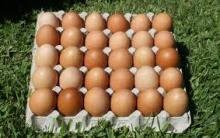 High Quality White / Brown Chicken Table Eggs In Trays and Cartons
