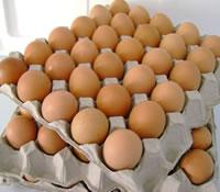 Fresh Fertile Chicken Eggs at cheap prices