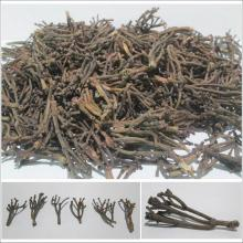 Clove Stem Indonesian Origin