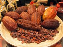 High quality natural Cocoa extract 10% 20% Theobromine powder