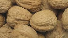 High Quality Organic Raw Walnuts in Shell / Without Shell