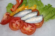 High Quality HGT horse mackerel