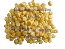 Freeze Dried Sweet Corn-j