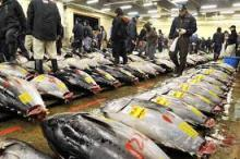 Best Quality Fresh and Frozen Tuna (Bluefin, Yellofin, Bigeye) available now